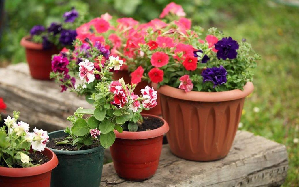 Сажаем цветы на балконе в ящиках | красивый дом и сад