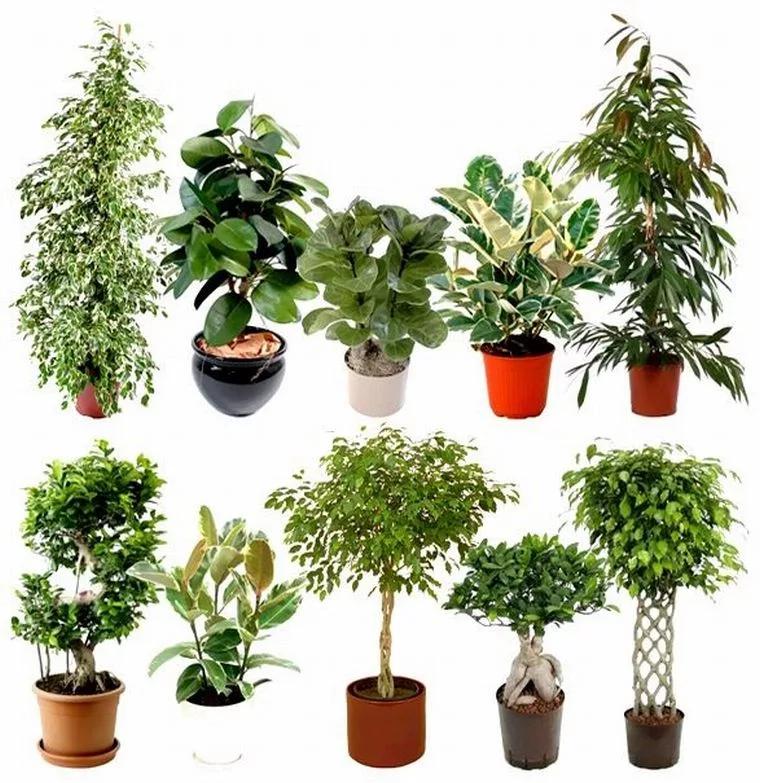 каждом городе поиск вида растения по фото наш язык