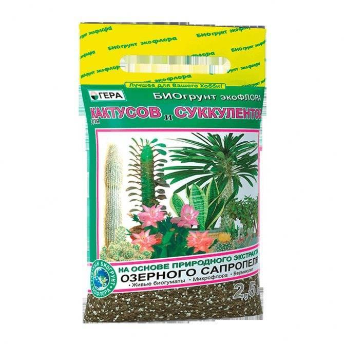 Варианты размножения и ухода за кактусами: полив и укоренение цветка