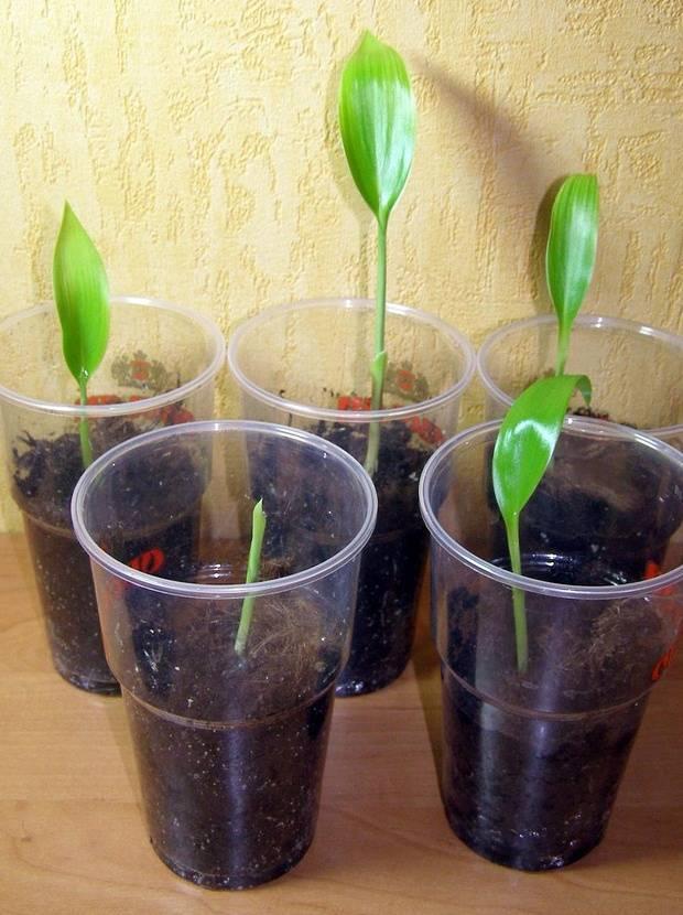 Как посадить орхидею семенами в домашних условиях - правила посадки и ухода