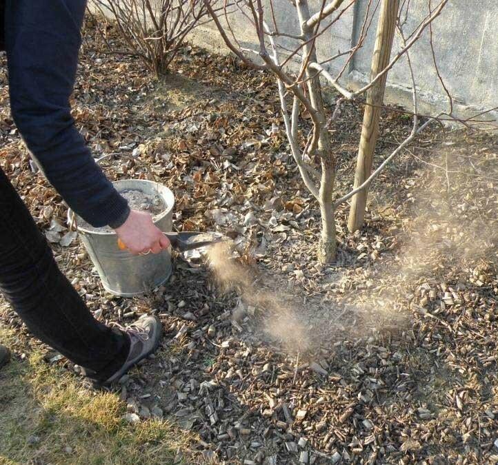 Какие удобрения нужны саду весной — нормы подкормки растений