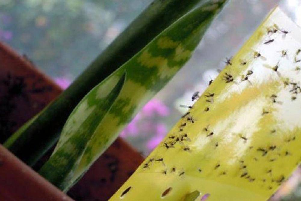Как избавиться от мошек в цветах