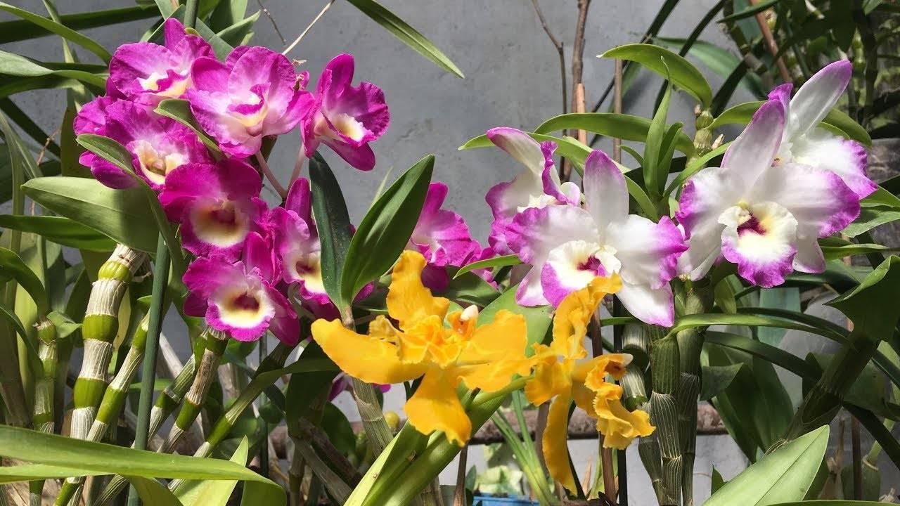 Основные виды орхидей и варианты ухода за ними: полив, подкормка и другие