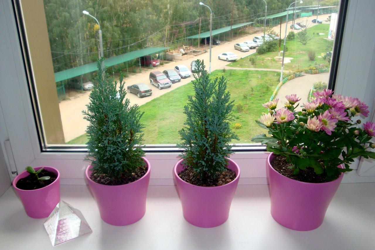 Как вырастить петунию на балконе: посадка в кашпо, горшки, какую землю любит