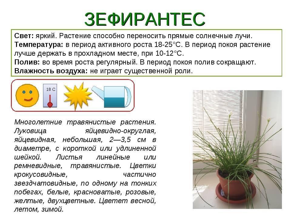 Комнатные растения - уход зимой