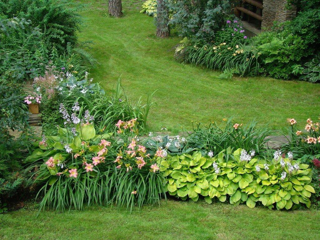 Посадка астильбы в открытый грунт весной на урале, в сибире, почему не цветет