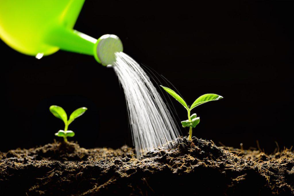 Уход за цветами: полив, удобрения, прополка и рыхление почвы