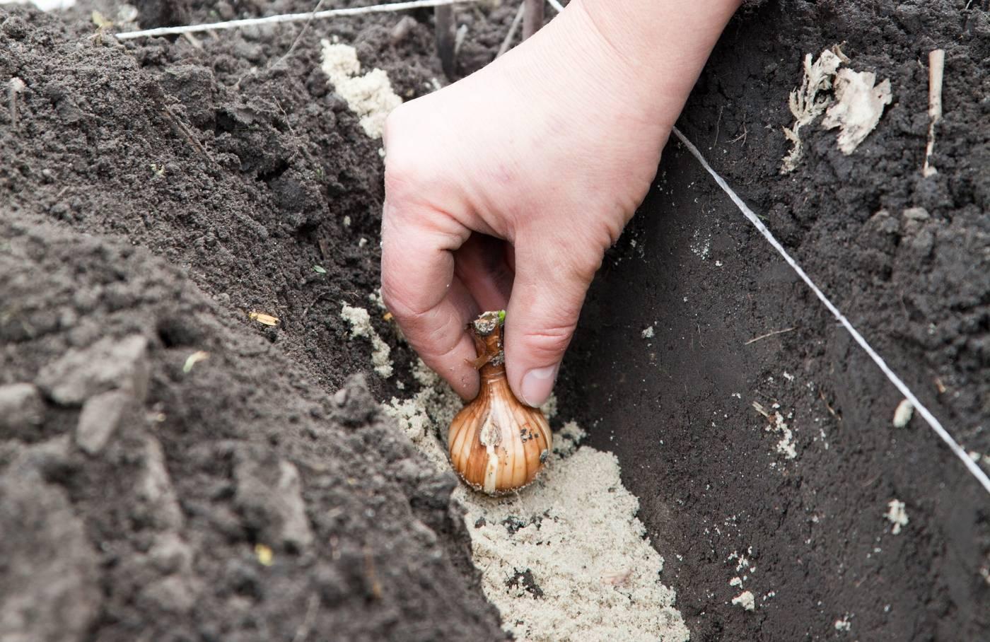 Чем подкормить лилии после цветения — в августе и осенью