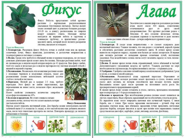 Цветы кордилина: виды на фото, уход в домашних условиях