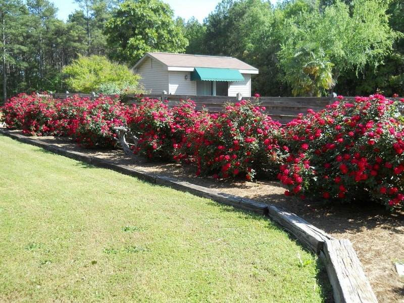 5 стилей оформления цветника из роз которые поражают своей красотой