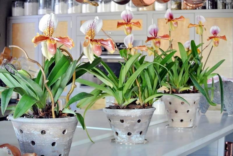 Расскажем про подробный уход за орхидеями в горшке в домашних условиях