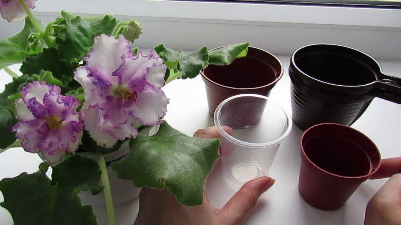 Горшки для фиалок (33 фото): какие модели нужны? размеры горшков. как выбрать цветочный горшок для мини-фиалки? особенности моделей «аленький цветочек»