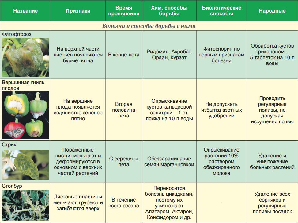 Болезни садовых цветов и их лечение - энциклопедия цветов