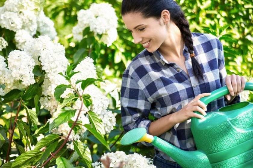 Комнатные растения: освещение, полив, опрыскивание, температура - 4 главных условия. как правильно ухаживать за комнатными растениями