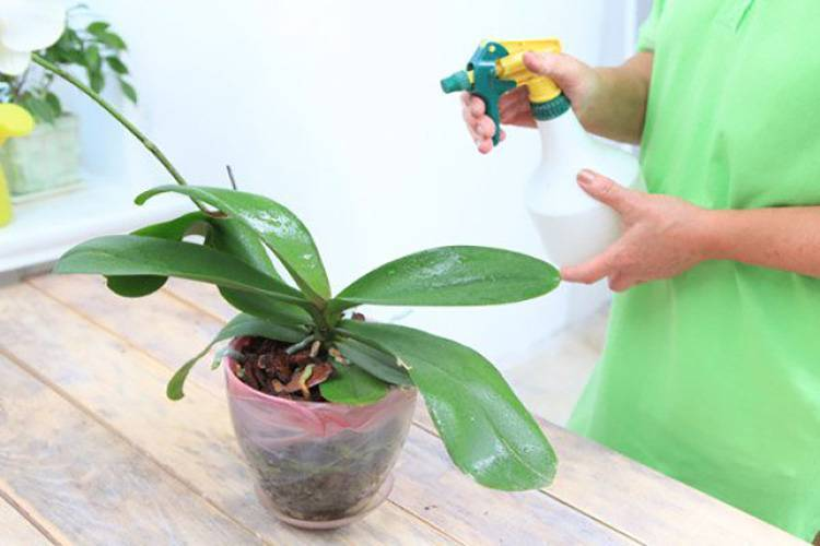 Удобрение для орхидеи фаленопсис: когда и чем подкармливать растение до, после и во время цветения, как правильно это делать в домашних условиях?