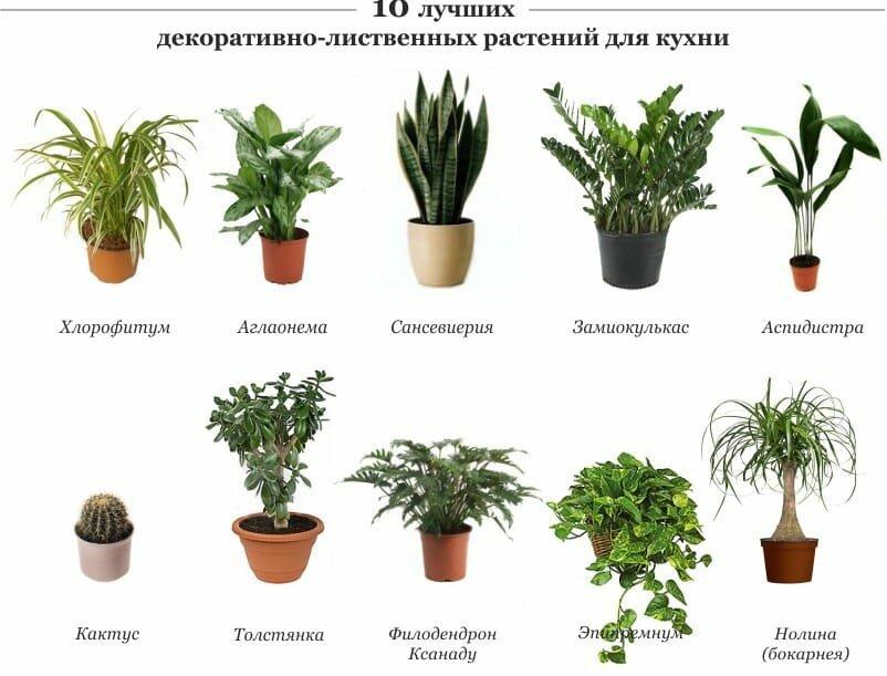 картинка и названия комнатных растений и цветов в интернет магазине милана фотографировала даче