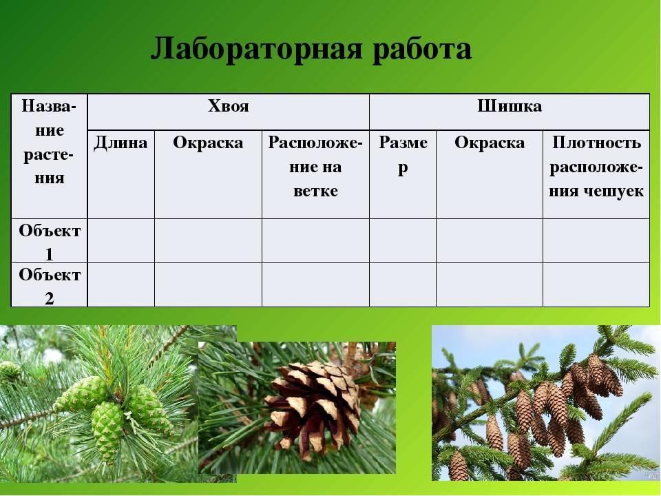 Камелия садовая — посадка и уход в открытом грунте - pocvetam.ru