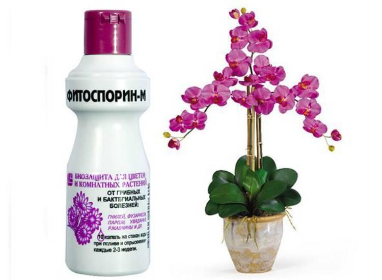 Биофунгицид фитоспорин для комнатных растений и культур открытого грунта: инструкция по применению пасты, порошка и жидкого концентрированного средства