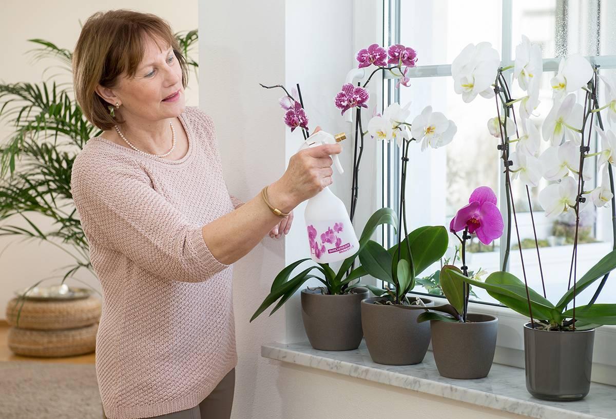 Орхидея отцвела: что делать дальше?