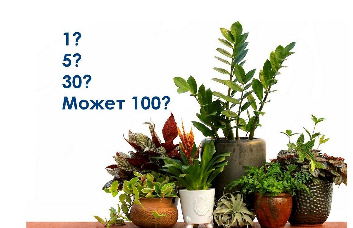 Комнатные растения, которые очищают воздух в помещении