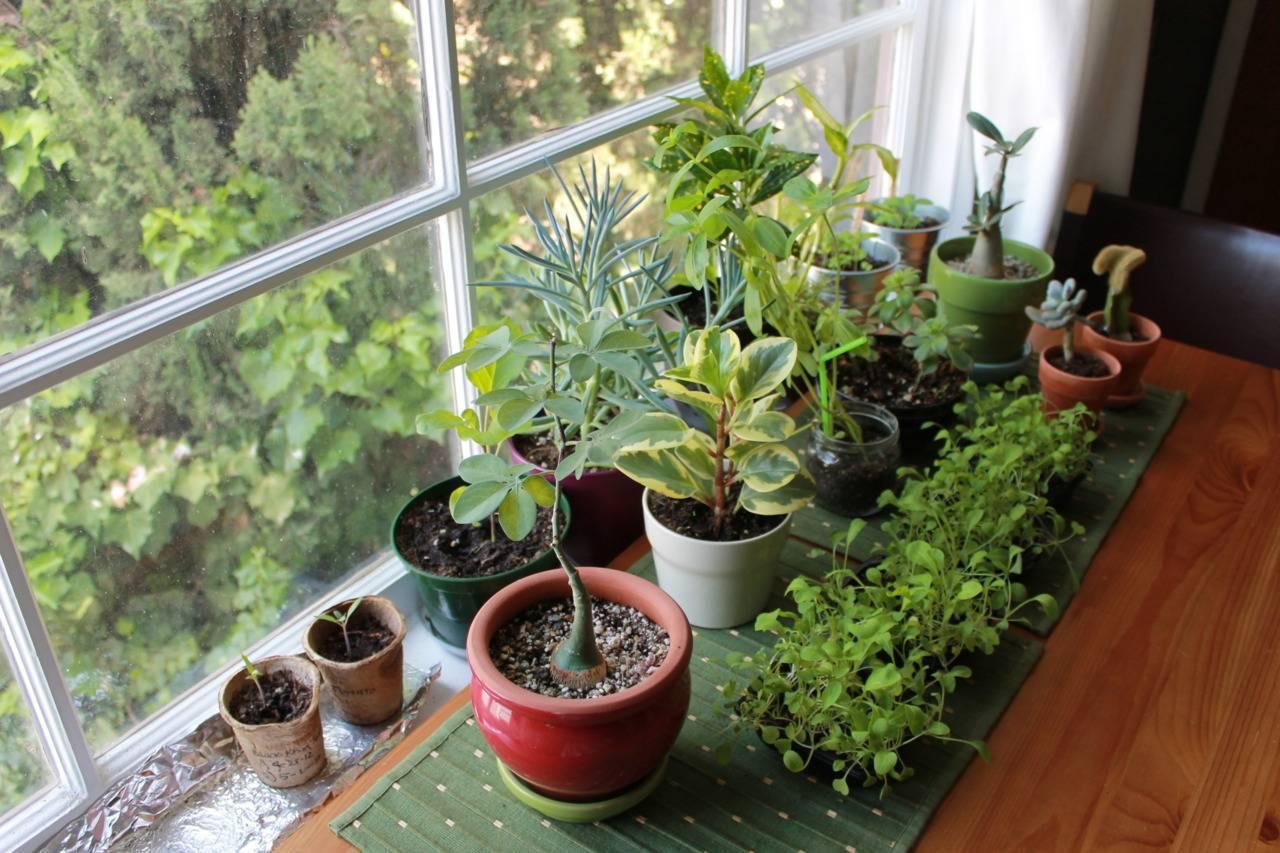 Правила подкормок для комнатных растений