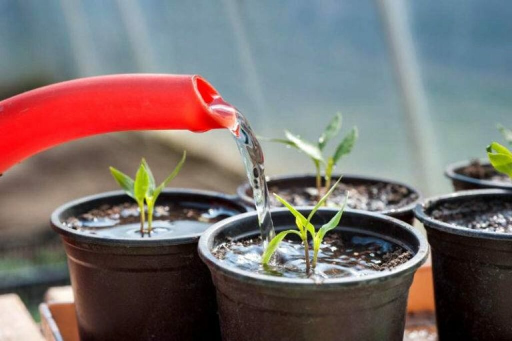 Кашпо с автополивом для комнатных растений