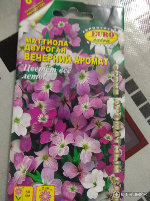 Сажаем маттиолу вечерний аромат на даче: полезные советы и рекомендации