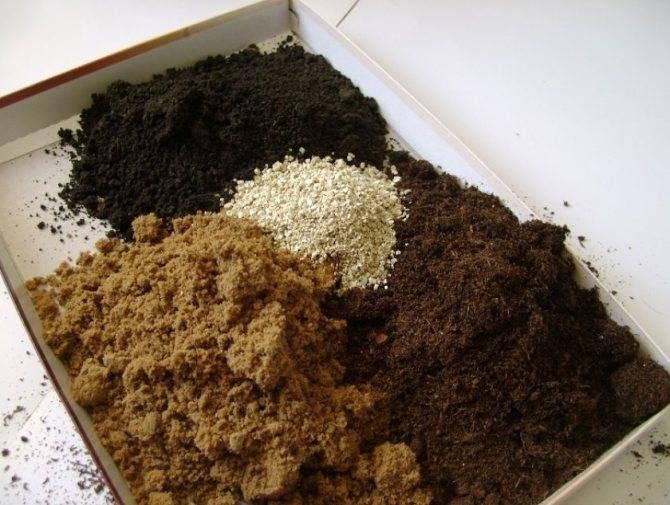 Какая нужна почва для спатифиллума — необходимый состав и требования