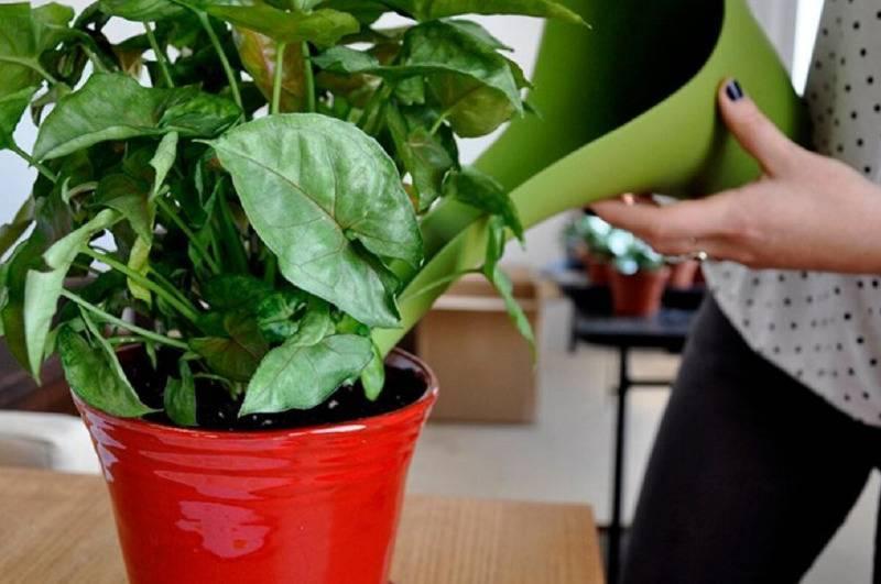 Какой грунт нужен для выращивания антуриума?