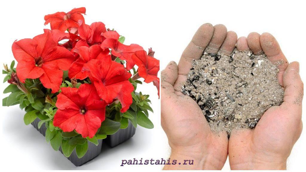 Удобрения для петуний при выращивании