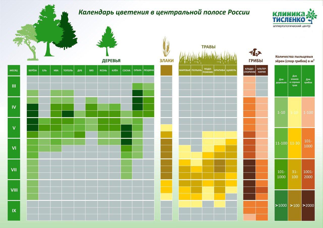 Когда пересаживать пионы – осенью или весной? и как правильно это делать
