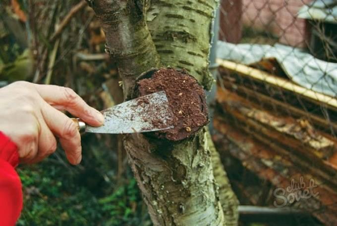 Чем замазывать спилы на плодово садовых деревьях