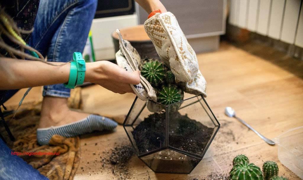 Как правильно вырастить алоэ: уход в домашних условиях и нюансы выращивания