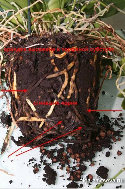 Состав грунта для орхидей своими руками: как приготовить субстрат в домашних условиях, самому сделать почву, добавив в нее сосновую кору, золу и другие компоненты