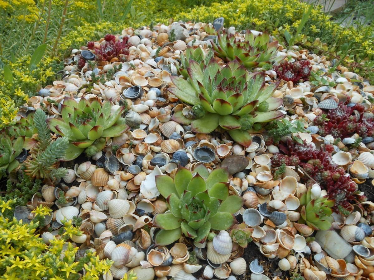 Стапелия цветок — уход в домашних условиях