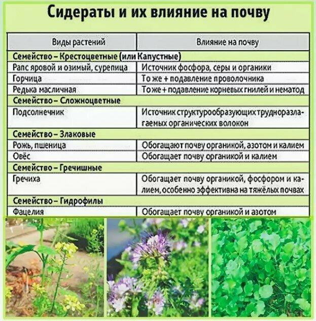 Люпин как сидерат: когда сеять и когда закапывать - onwomen.ru