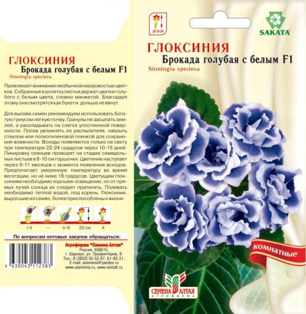 Уход и выращивание глоксинии махровой