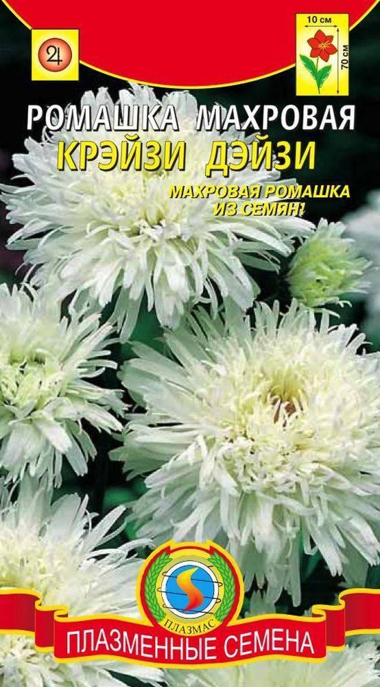Нивяник: сорта, выращивание, размножение
