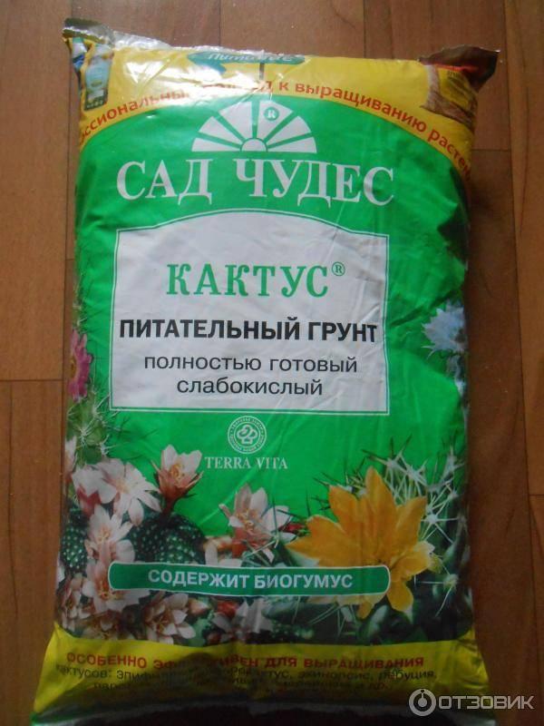 Как пересадить кактус: варианты в домашних условиях