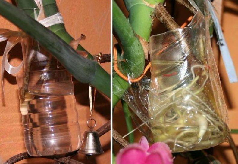Уникальное быстрорастущее растение «филодендрон»: уход в домашних условиях, виды