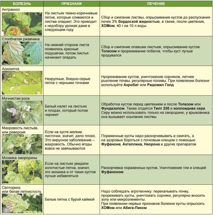 Как заставить цвести и плодоносить сливу