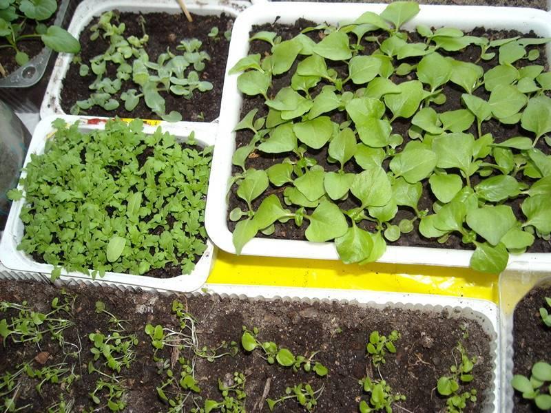 Клематисы - посадка и уход в открытом грунте для новичков: весной и осенью