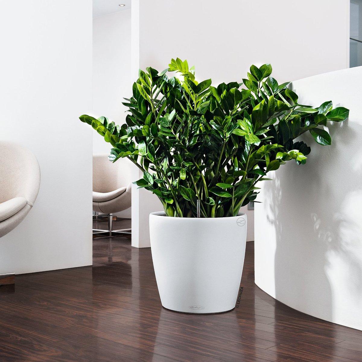 Тенелюбивые и неприхотливые цветы для вашего дома