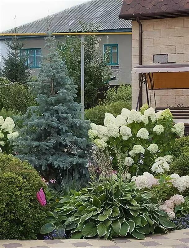 Что посадить рядом с гортензией: хорошие и плохие соседи - etocvetochki.com