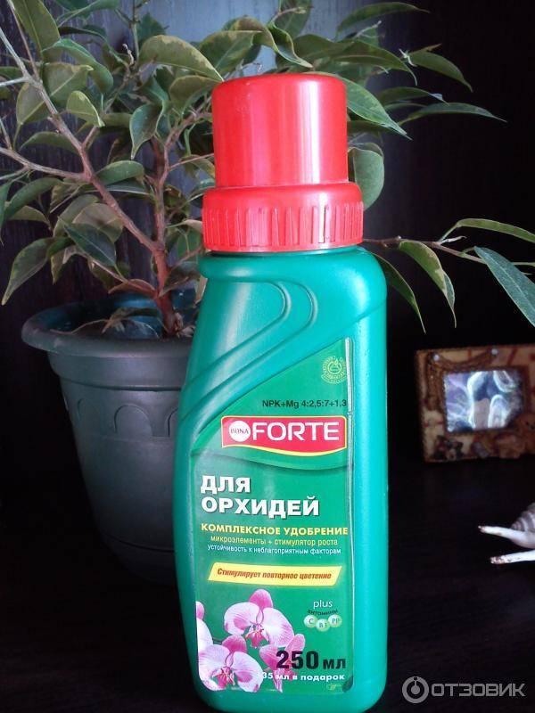 Bona forte для всех комнатных растений инструкция