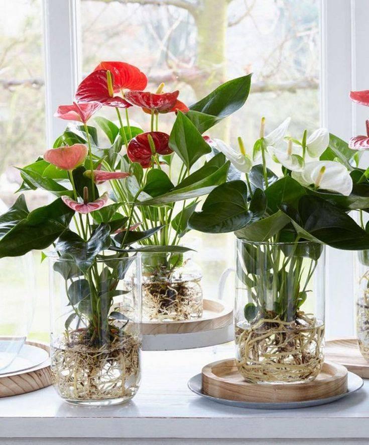 Полезные цветы для дома (52 фото): какие комнатные растения обязательно должны быть в каждом доме? самые лучшие цветы для детской комнаты