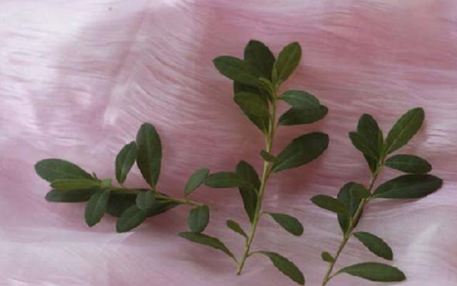Азалия размножение в домашних условиях: семенами, черенками и правильная пересадка