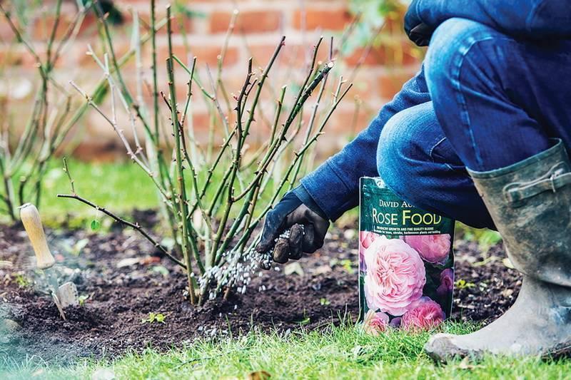 Чем подкормить клематис весной для роста