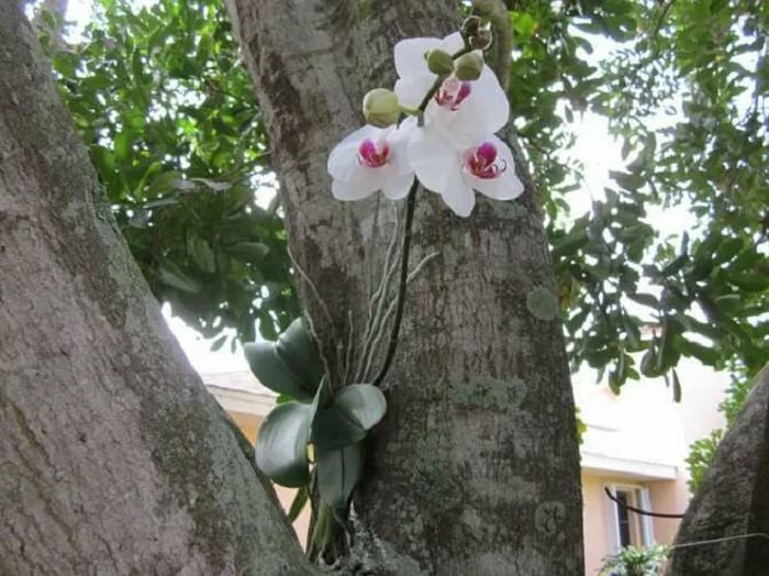 Орхидеи в природе- фото и описания представителей семейства орхидных