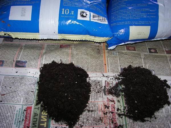 Грунт для бегонии: какая земля нужна для посадки комнатного растения, как приготовить правильный состав почвы в домашних условиях?